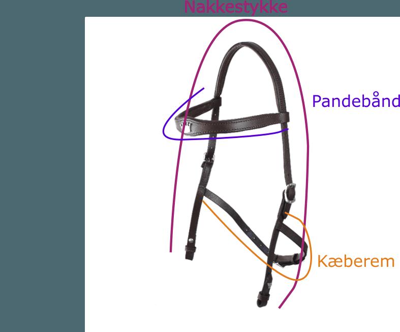 Størrelsesguide til hackamore trense